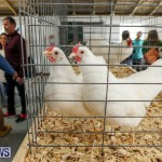 Poultry Show Bermuda, February 20 2016 (67)