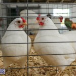 Poultry Show Bermuda, February 20 2016 (69)