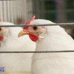 Poultry Show Bermuda, February 20 2016 (70)