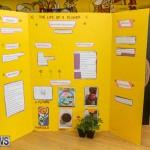 Purvis Primary Science Fair Bermuda, February 24 2016-10