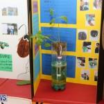 Purvis Primary Science Fair Bermuda, February 24 2016-118