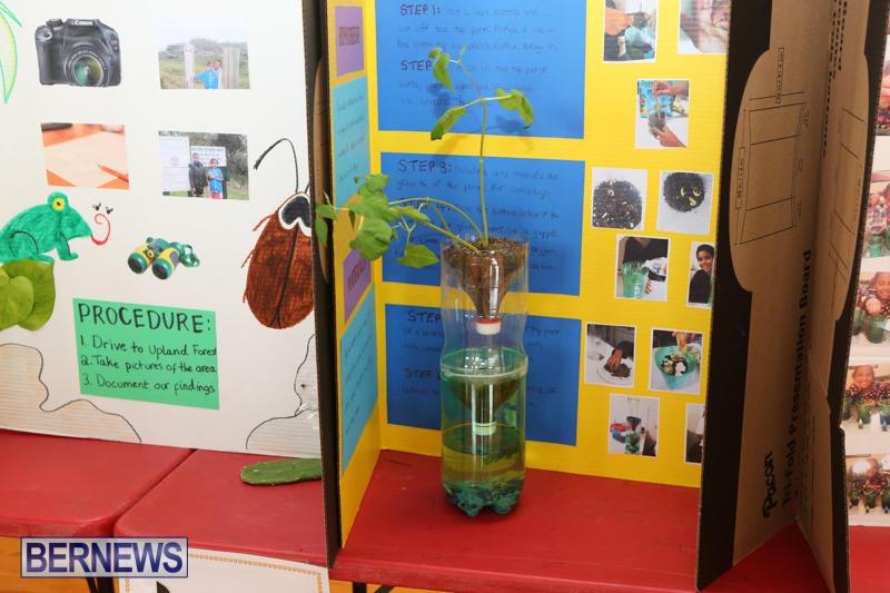Purvis-Primary-Science-Fair-Bermuda-February-24-2016-118