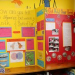 Purvis Primary Science Fair Bermuda, February 24 2016-12