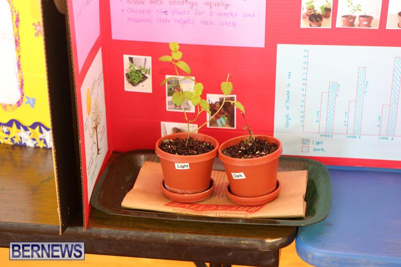 Purvis-Primary-Science-Fair-Bermuda-February-24-2016-122