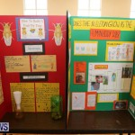 Purvis Primary Science Fair Bermuda, February 24 2016-126