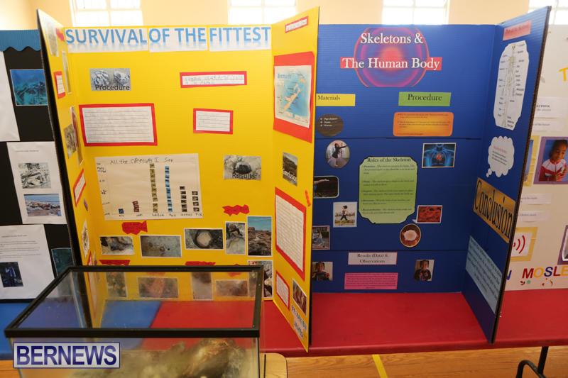 Purvis-Primary-Science-Fair-Bermuda-February-24-2016-134