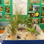 Purvis Primary Science Fair Bermuda, February 24 2016-31