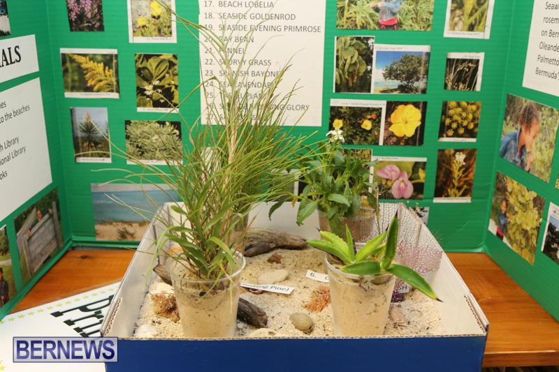 Purvis-Primary-Science-Fair-Bermuda-February-24-2016-31