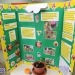 Purvis Primary Science Fair Bermuda, February 24 2016-34