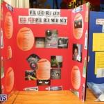 Purvis Primary Science Fair Bermuda, February 24 2016-56