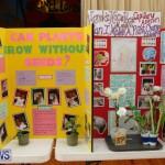 Purvis Primary Science Fair Bermuda, February 24 2016-73