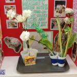 Purvis Primary Science Fair Bermuda, February 24 2016-80