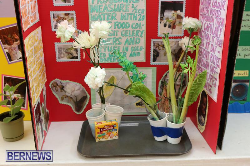 Purvis-Primary-Science-Fair-Bermuda-February-24-2016-80