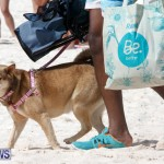 Horseshoe Bay Beach Good Friday Bermuda, March 25 2016 (79)