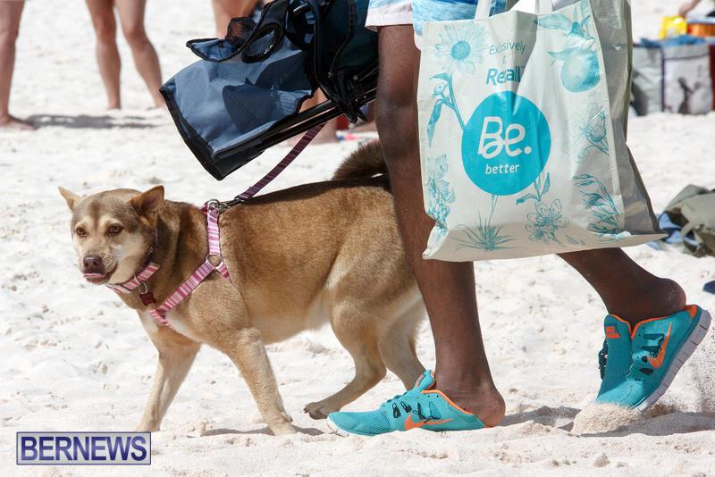 Horseshoe-Bay-Beach-Good-Friday-Bermuda-March-25-2016-79