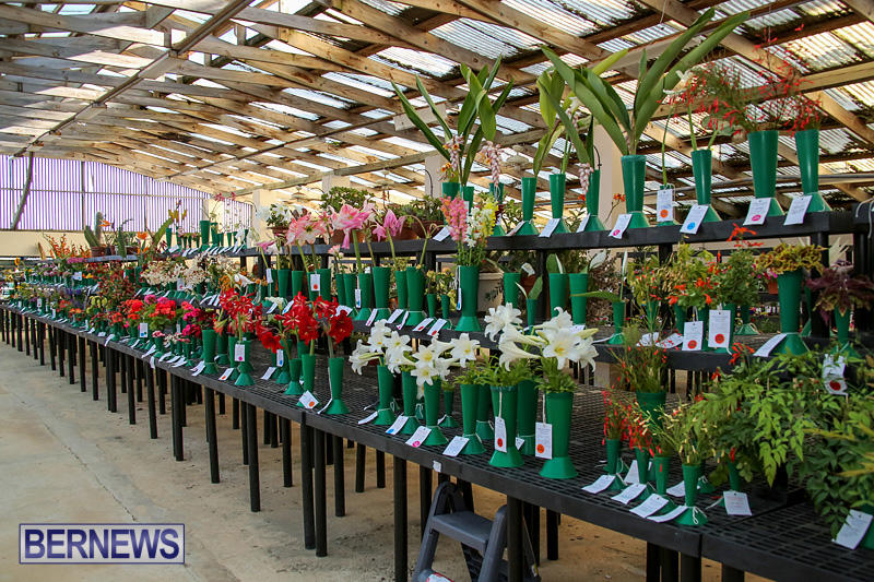 Ag-Show-Bermuda-April-14-2016-184