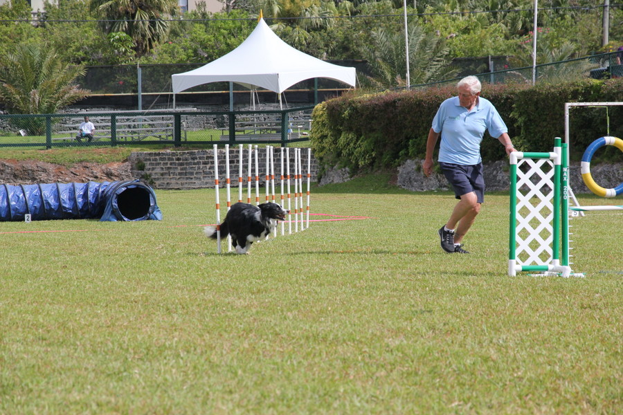 Dog-Agility-at-2016-ag-show-bermuda-12