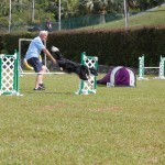 Dog Agility at 2016 ag show bermuda (13)