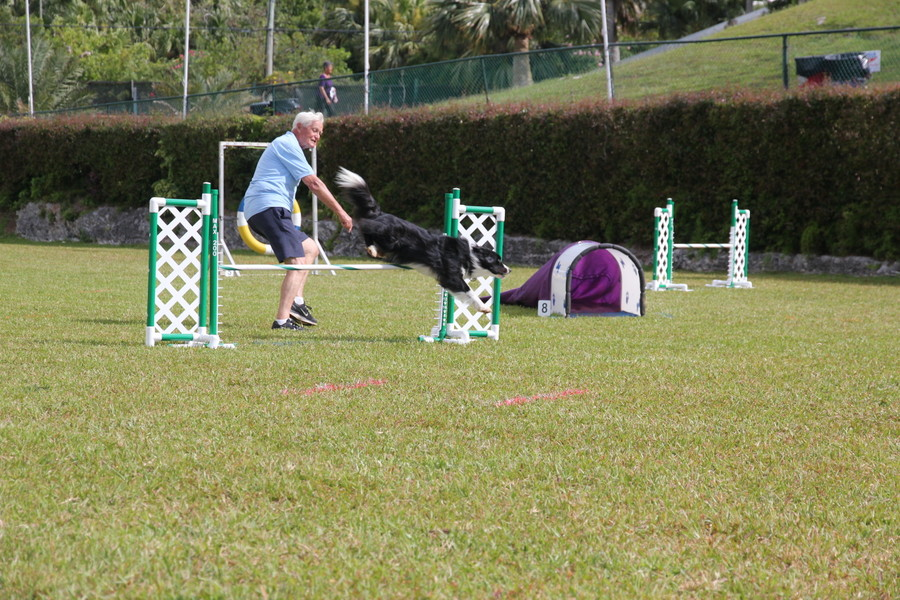 Dog-Agility-at-2016-ag-show-bermuda-13