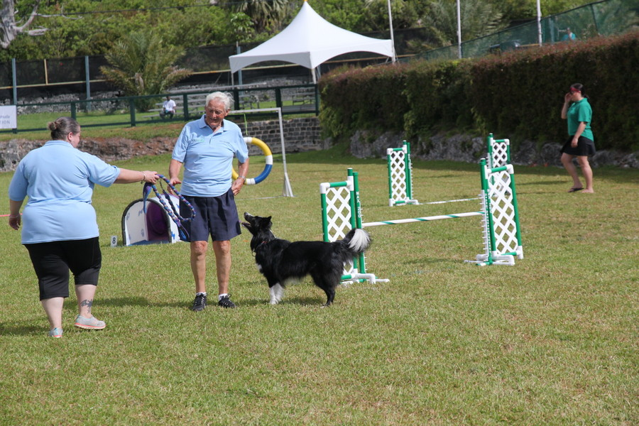 Dog-Agility-at-2016-ag-show-bermuda-14