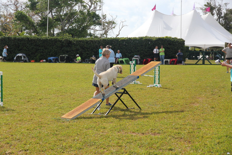 Dog-Agility-at-2016-ag-show-bermuda-2