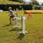 Dog Agility at 2016 ag show bermuda (3)