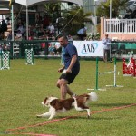 Dog Agility at 2016 ag show bermuda (6)