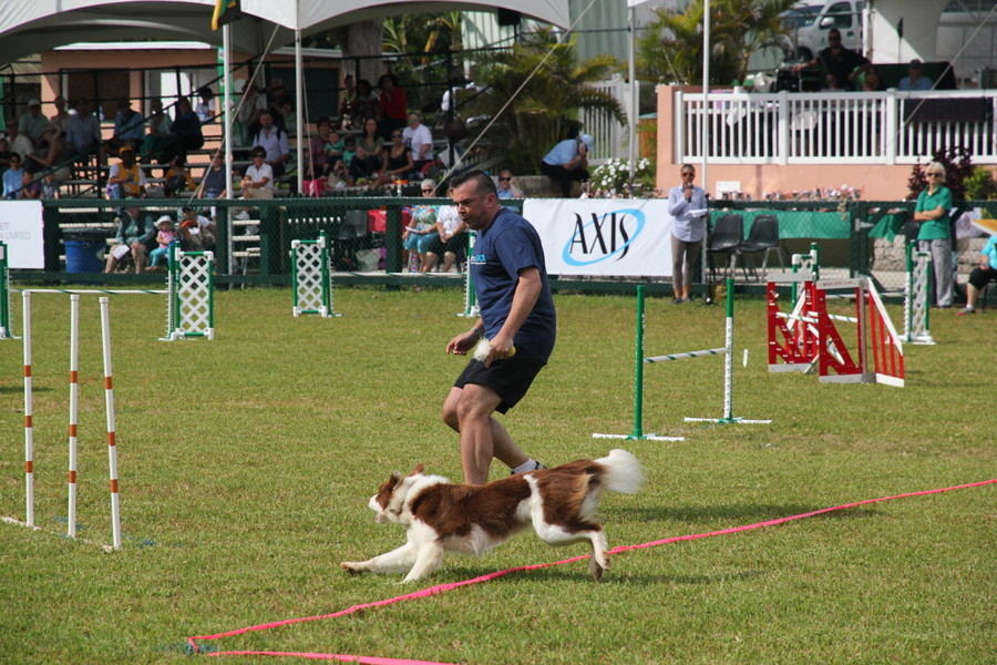 Dog-Agility-at-2016-ag-show-bermuda-6