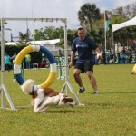 Dog Agility at 2016 ag show bermuda (8)