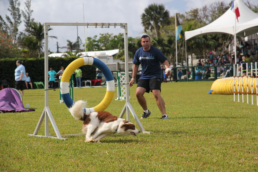 Dog-Agility-at-2016-ag-show-bermuda-8