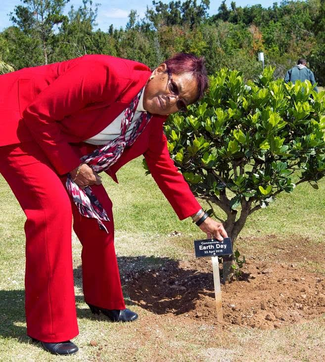 Earth Day Tree Planting Bermuda April 22 2016 (2)