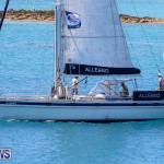 ARC Europe ARC USA Rally Bermuda, May 17 2016-154