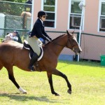 Equestrian Bermuda May 03 2016 (6)