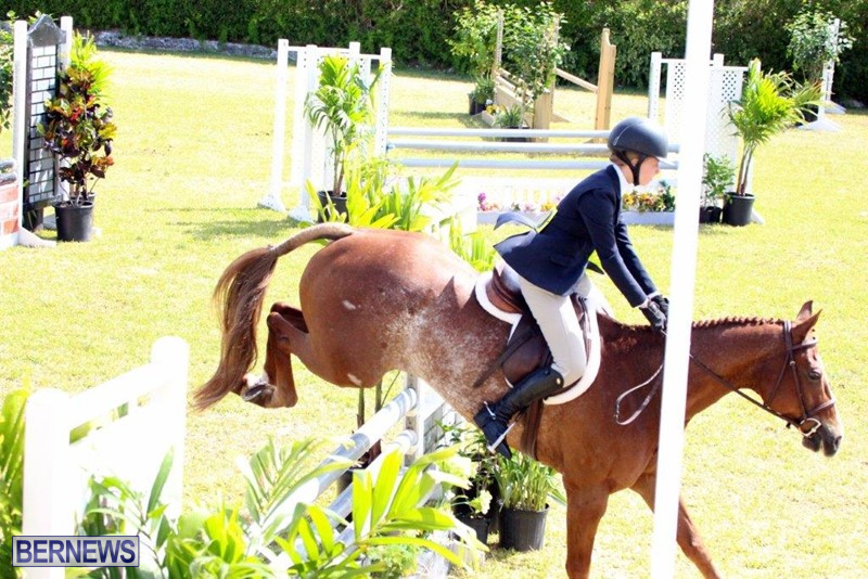 Equestrian-Bermuda-May-03-2016-9