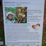 Onion Day at Carter House Bermuda, May 14 2016-23