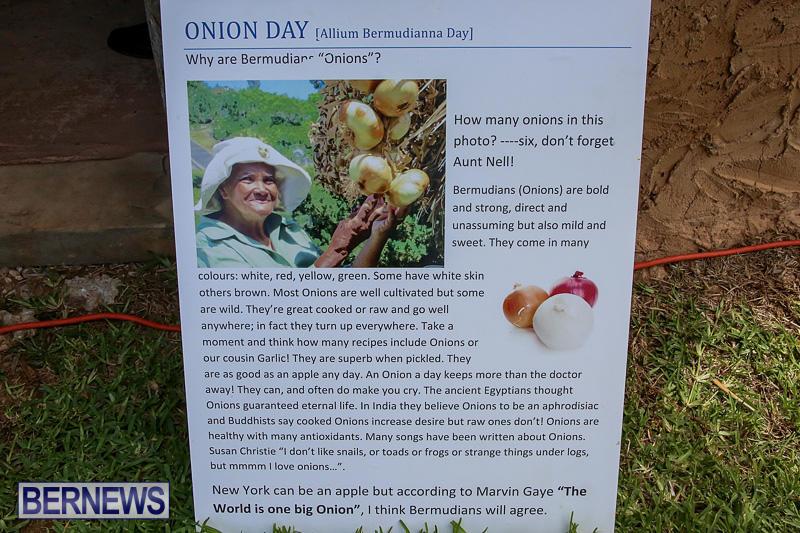 Onion-Day-at-Carter-House-Bermuda-May-14-2016-23