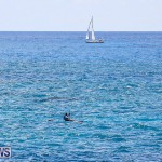 SUP Around The Island Bermuda, May 28 2016-29