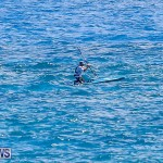 SUP Around The Island Bermuda, May 28 2016-40