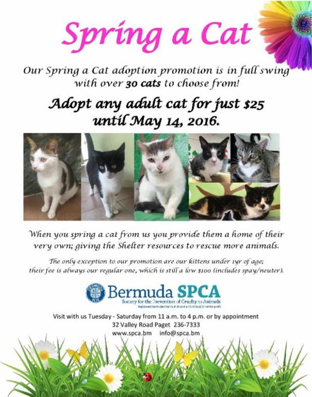 spring a cat bermuda May 6 2016