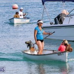 Around The Island Seagull Race Bermuda, June 25 2016-8