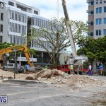 Tree Moving At City Hall Parking Lot Bermuda, June 11 2016-1