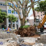 Tree Moving At City Hall Parking Lot Bermuda, June 11 2016-10