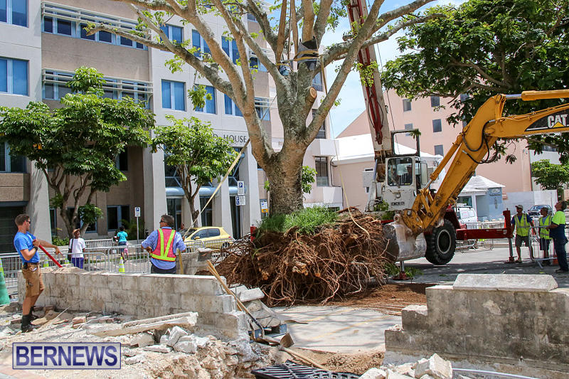 Tree-Moving-At-City-Hall-Parking-Lot-Bermuda-June-11-2016-10