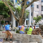 Tree Moving At City Hall Parking Lot Bermuda, June 11 2016-11