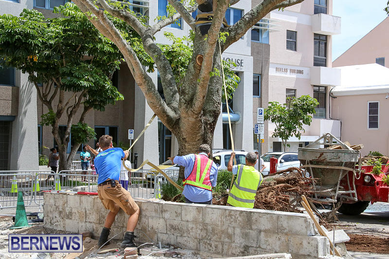 Tree-Moving-At-City-Hall-Parking-Lot-Bermuda-June-11-2016-11