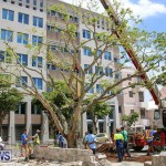 Tree Moving At City Hall Parking Lot Bermuda, June 11 2016-12