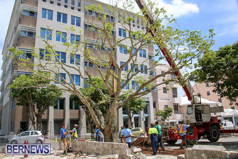 Tree-Moving-At-City-Hall-Parking-Lot-Bermuda-June-11-2016-12