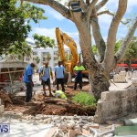 Tree Moving At City Hall Parking Lot Bermuda, June 11 2016-14