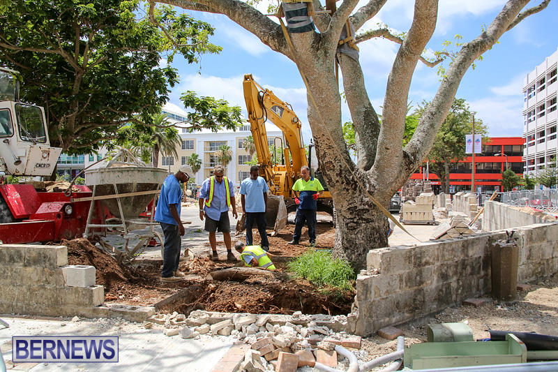 Tree-Moving-At-City-Hall-Parking-Lot-Bermuda-June-11-2016-14