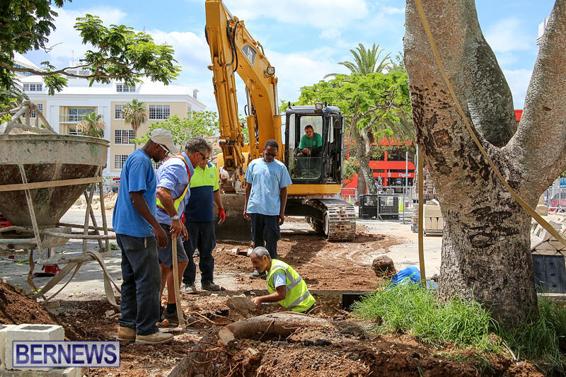 Tree-Moving-At-City-Hall-Parking-Lot-Bermuda-June-11-2016-15